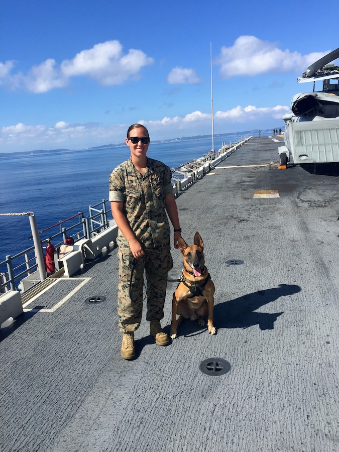 U.S. Marine Corps Sgt. Jenna Cauble, a military working dog (MWD) handler, was assigned to MWD Bbutler P283 in July 2015, where they served together at Marine Corps Base Smedley D. Butler, Okinawa, Japan, until November 2017. Bbutler was retired from military service in May 2020, and reunited with Cauble Feb. 3, 2021, who had put in adoption papers before returning to the U.S. in 2017.   (Courtesy photo provided by U.S. Marine Corps Sgt. Jenna Cauble)