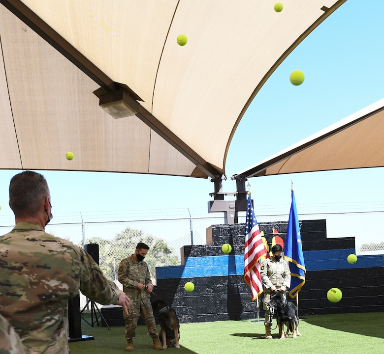 Rango, left, and Boss, right, 56th Security Forces Squadron military working dogs, participate in the ceremonial tennis ball throw during their retirement ceremony March 19, 2021 at Luke Air Force Base, Arizona. Both dogs are highly decorated working dogs. MWD Boss has multiple deployments and MWD Rango has assisted on several criminal apprehensions and located over $20,000 in narcotics. As the Air Force prepares to retire a MWD, the dog's handler can request to adopt the dog enabling it to live the remainder of its life as a family member. Boss and Rango will retire and live at home with their respective handler. (U.S. Air Force photo by Staff Sgt. Amber Carter)