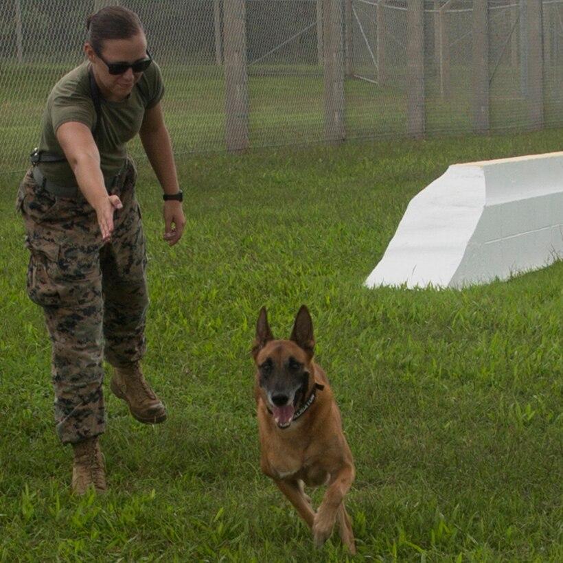 A Marine signals toward a dog.