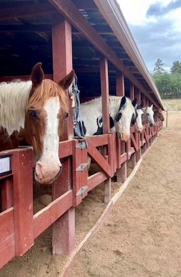 Horses stand under shelter in a stable at the U.S. Air Force Academy Equestrian Center.