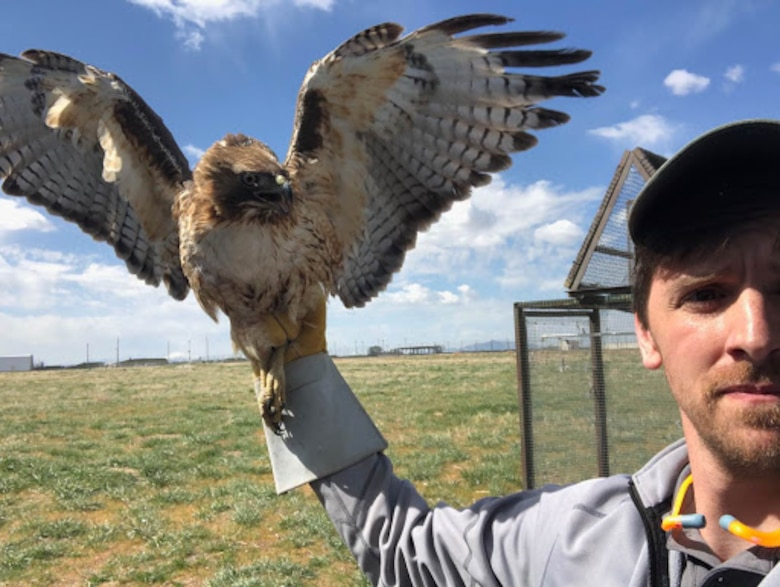 Tyler Adams, a US Department of Agriculture wildlife biologist at Hill Air Force Base, Utah, displays a red-tailed hawk captured near the base's flight line. The bird will be taken to a new habitat as part of the Raptor Relocation Program, which focuses on trapping kestrels, hawks, owls, and other raptors and relocating the birds to safer and more suitable habitats away from the airfield. (Courtesy photo)