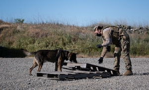 Airman shows a dog where to search