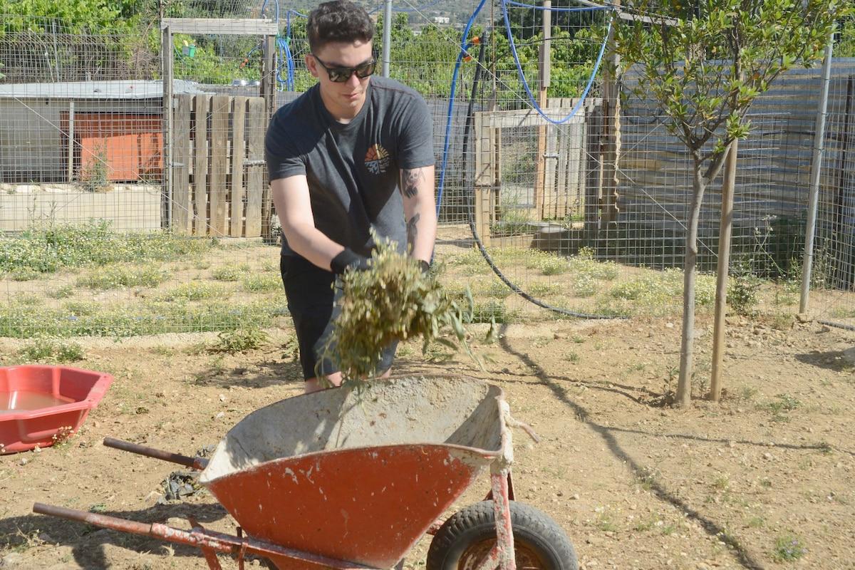 A sailor puts a handful of weeds in a wheelbarrow.