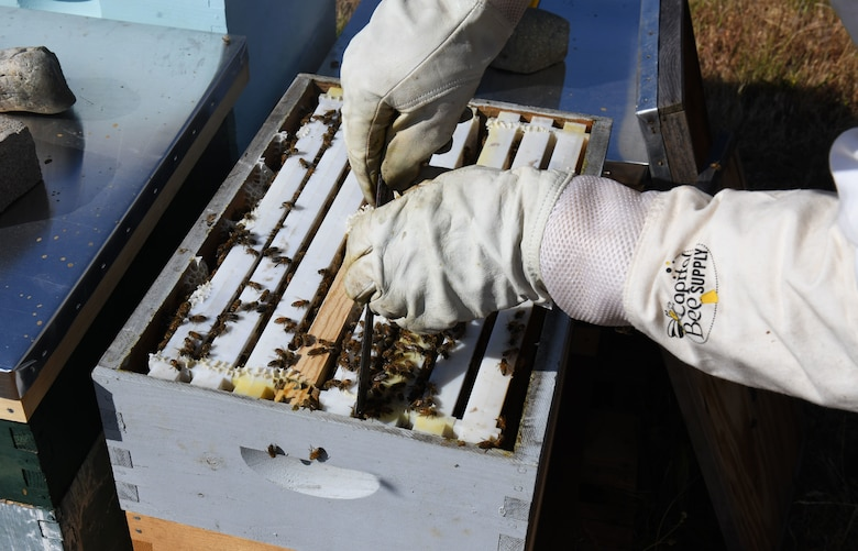 Blaze Baker separates frames to check on bees.