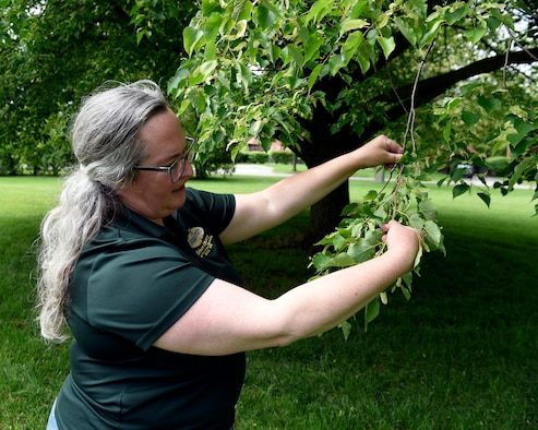Wendi Van Buren, a regional urban forester with the Ohio Department of Natural Resources, studies the growth of a little leaf Linden tree near the Turtle Pond at Wright-Patterson Air Force Base, Ohio on May 18, 2021. The 88th Civil Engineer Group has partnered with the ODNR Division of Forestry to design a tree planting strategy for Wright-Patt. (U.S. Air Force photo by Ty Greenlees)