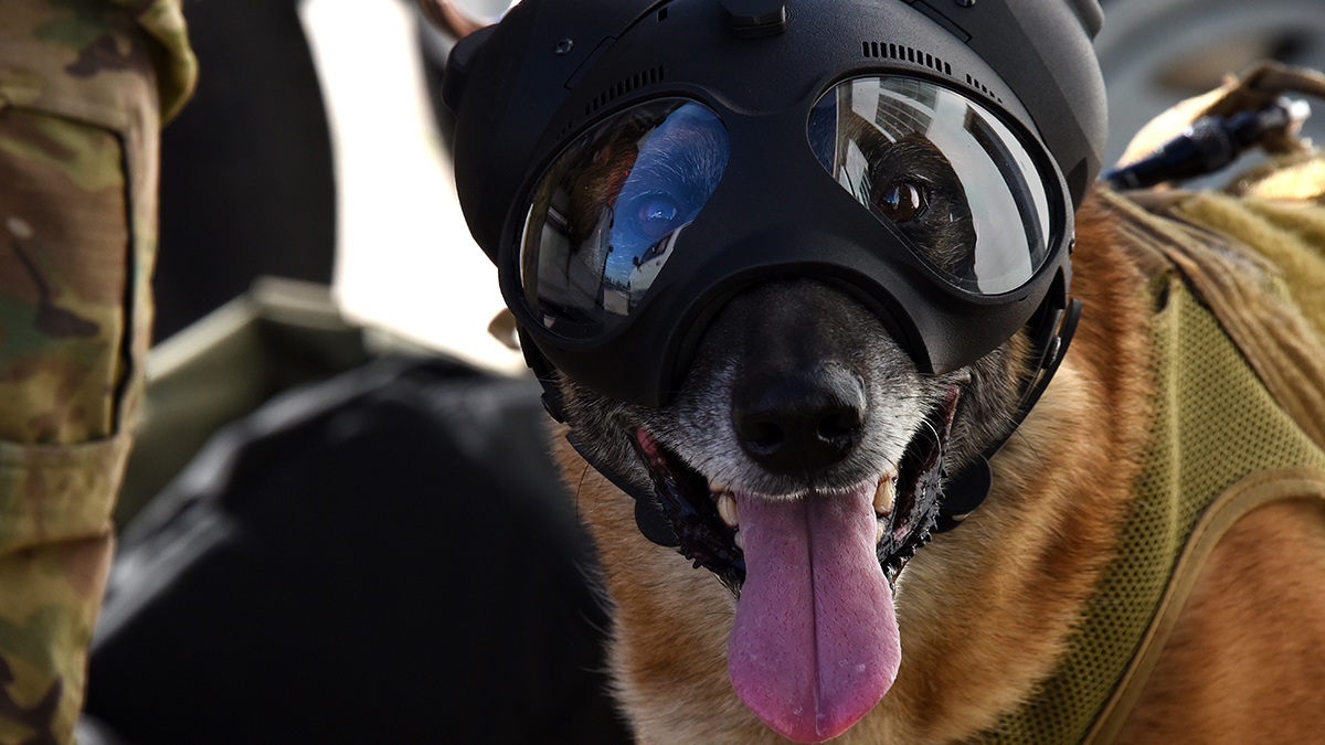 four-legged fighters