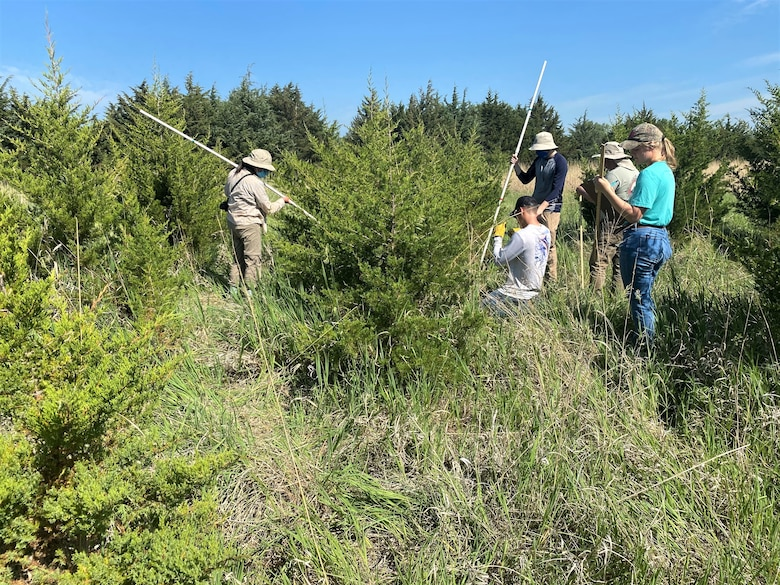 South Dakota State University volunteer, students and staff, measure and tag cedar trees for targeted goat grazing studies on eastern red cedar trees at the U.S. Army Corps of Engineers, Omaha District's Fort Randall Project near Pickstown, South Dakota, June 10.