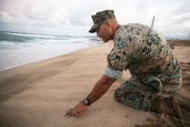 U.S. Marine Corps Col. Speros Koumparakis, commanding officer, Marine Corps Base Hawaii, prepares to release a baby sea turtle during an excavation at Fort Hase Beach, Marine Corps Base Hawaii, July 26, 2021. The natural wildlife and landscape is a precious resource to both MCBH and the people of Hawaii, and we take seriously our stewardship role of protecting these resources. (U.S. Marine Corps photo by Lance Cpl. Samantha Sanchez)