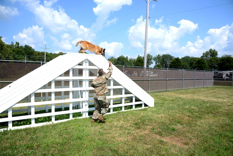 Mesha, a military working dog with the 88th Security Forces Squadron, is led over stairs Aug. 18 by her handler, Staff Sgt. Matthew Watkins, on the new obstacle course at Wright-Patterson Air Force Base. (U.S. Air Force photo by Airman 1st Class Jack Gardner)