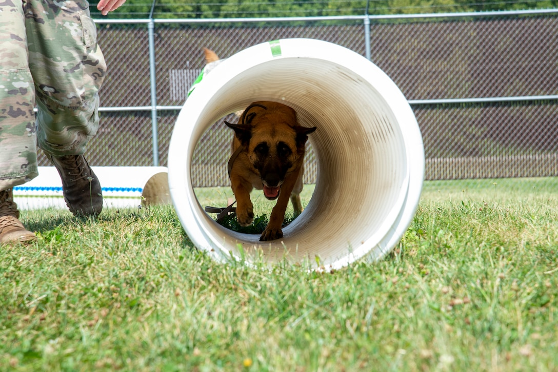 Military Working Dog Mesha, who's assigned to the 88th Security Forces Squadron, runs through a tunnel Aug. 18 alongside her handler, Staff Sgt. Matthew Watkins, on the new obstacle course at Wright-Patterson Air Force Base. (U.S. Air Force photo by Airman 1st Class Jack Gardner)