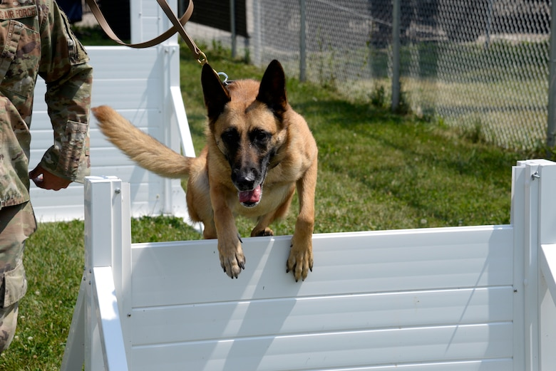 Mesha, an 88th Security Forces Squadron military working dog, and her handler, Staff Sgt. Matthew Watkins, run through hurdles Aug. 18 on the new MWD obstacle course at Wright-Patterson Air Force Base. (U.S. Air Force photo by Airman 1st Class Jack Gardner)