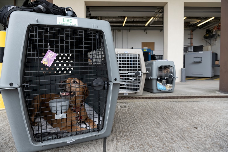 Pets who recently disembarked from a Patriot Express passenger aircraft wait for their owners to pick them up on Spangdahlem Air Base, Germany, Aug. 23, 2021.