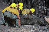 Soldiers remove fallen tree.